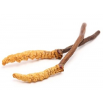 Cordyceps Sinensis 100 Capsule in Gel Vegetale